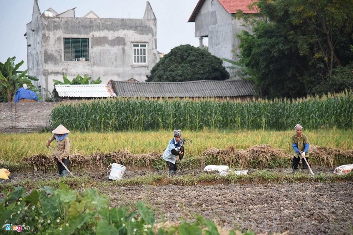 Biệt phủ, trang trại được sư Toàn xây dựng bên cạnh chùa Nga Hoàng-13