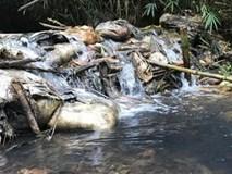 Nước nhiễm dầu nguy hại đến sức khỏe thế nào?