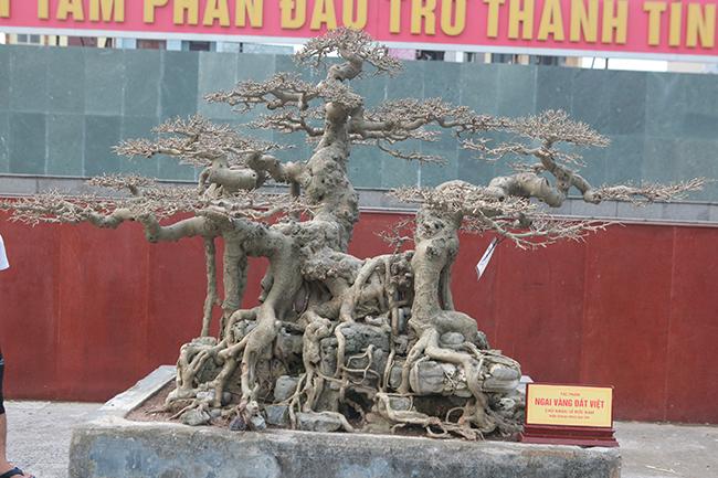 """Sanh Ngai vàng đất Việt"""" mua 10 triệu, sau 15 năm trả vài tỷ không bán-3"""