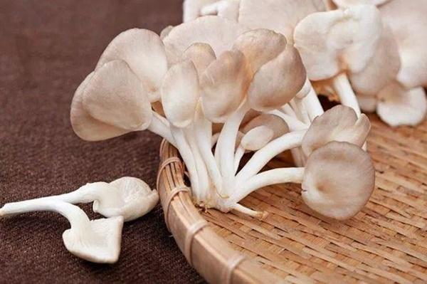 5 loại nấm tốt nhất cho sức khỏe ngừa chất gây ung thư loại 1, giúp trẻ thông minh hơn-2