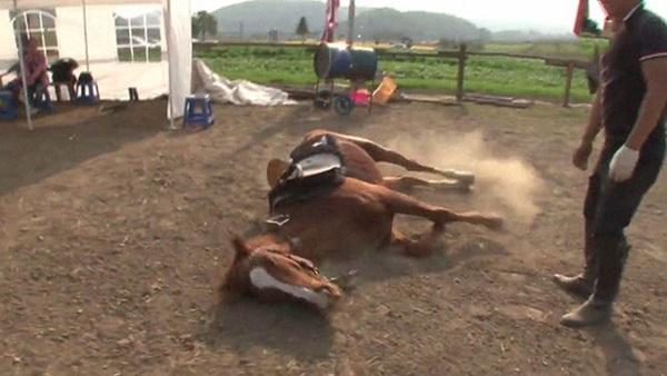 Con ngựa lười nhất thế giới: Hễ ai đòi cưỡi là giả vờ chết-1
