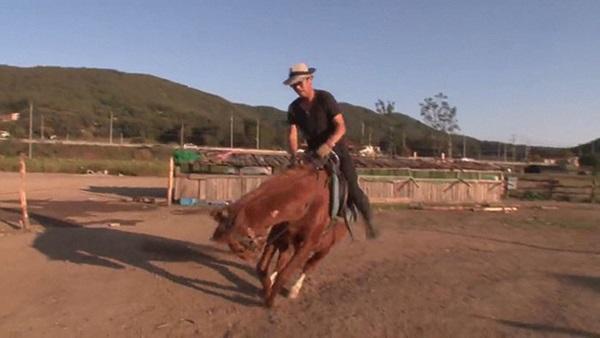 Con ngựa lười nhất thế giới: Hễ ai đòi cưỡi là giả vờ chết-5