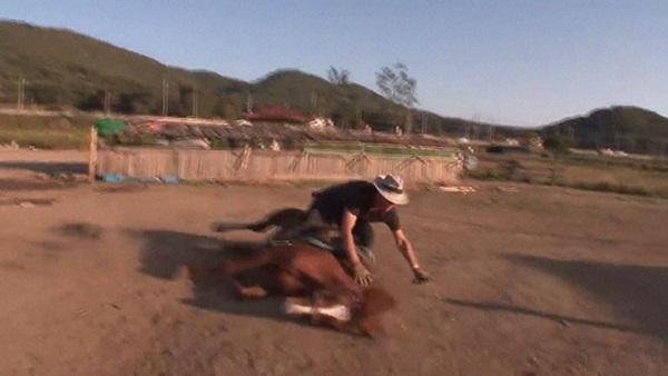 Con ngựa lười nhất thế giới: Hễ ai đòi cưỡi là giả vờ chết-6