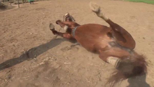 Con ngựa lười nhất thế giới: Hễ ai đòi cưỡi là giả vờ chết-7