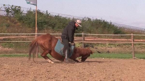 Con ngựa lười nhất thế giới: Hễ ai đòi cưỡi là giả vờ chết-8