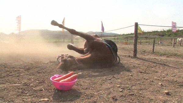 Con ngựa lười nhất thế giới: Hễ ai đòi cưỡi là giả vờ chết-12