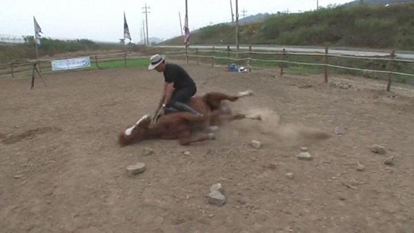 Con ngựa lười nhất thế giới: Hễ ai đòi cưỡi là giả vờ chết-9