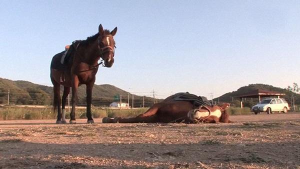 Con ngựa lười nhất thế giới: Hễ ai đòi cưỡi là giả vờ chết-10