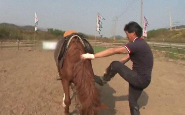 Con ngựa lười nhất thế giới: Hễ ai đòi cưỡi là giả vờ chết-15