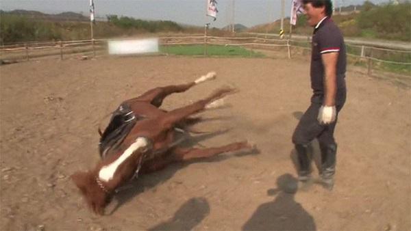 Con ngựa lười nhất thế giới: Hễ ai đòi cưỡi là giả vờ chết-16
