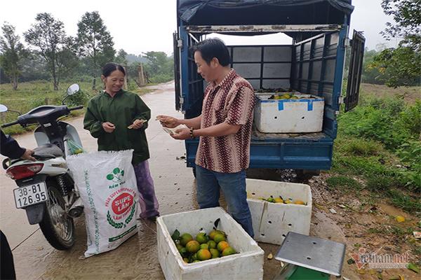 Hàng chục tấn cam đặc sản rụng tả tơi giữa vụ thu hoạch-2