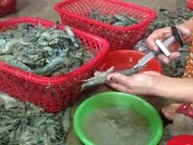 Tôm hùm bị bơm tạp chất thạch rau câu: Ăn vào hại cơ thể như nào?