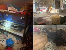 Phát hiện 3 đứa trẻ sống trong ngôi nhà ngập rác với 245 con vật