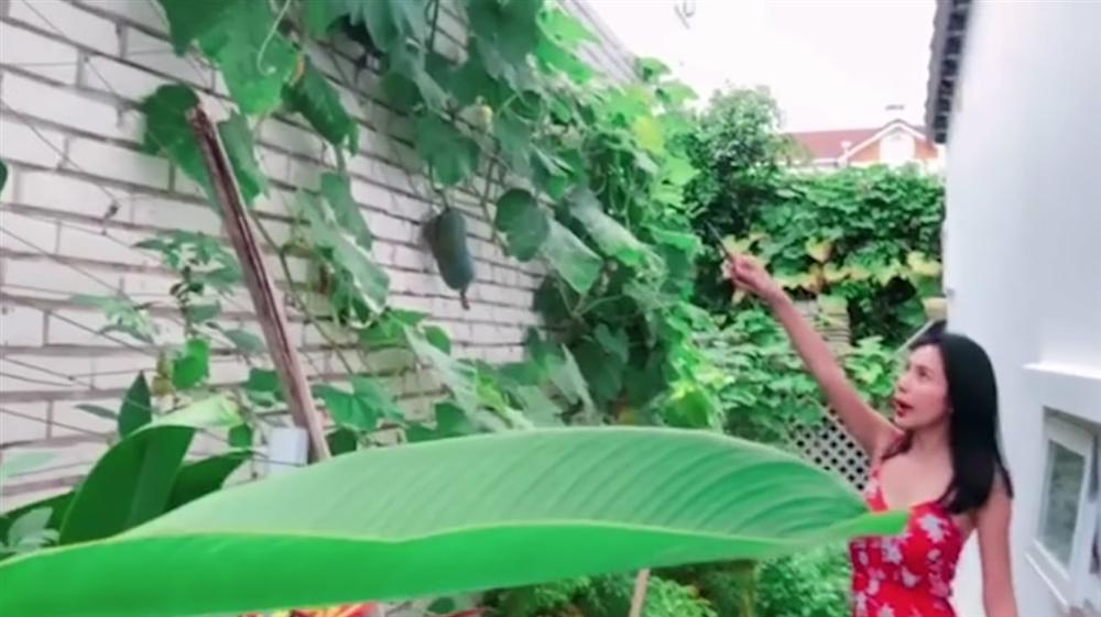 Khu vườn đủ thứ rau quả sạch trong biệt thự của Công Vinh - Thủy Tiên-1