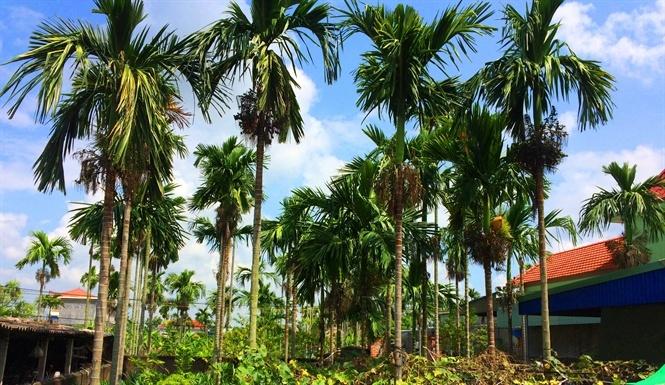 Duy nhất Việt Nam, ngôi làng trồng 1 loại quả bán sang Trung Quốc thu 1.000 tỷ-1