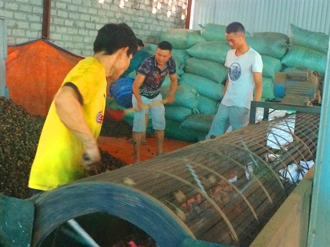 Duy nhất Việt Nam, ngôi làng trồng 1 loại quả bán sang Trung Quốc thu 1.000 tỷ-3