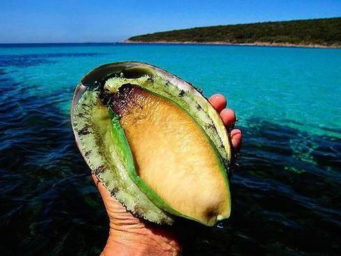 Gần chục triệu đồng một kg bào ngư xanh, nhà giàu Việt mua về tẩm bổ-1