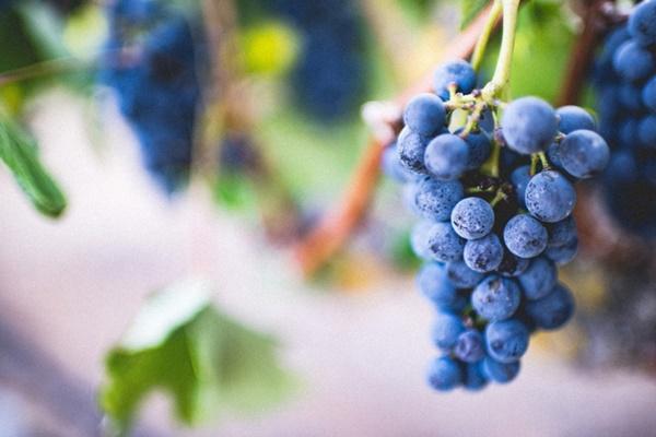 10 loại trái cây tốt cho từng bộ phận cơ thể-3