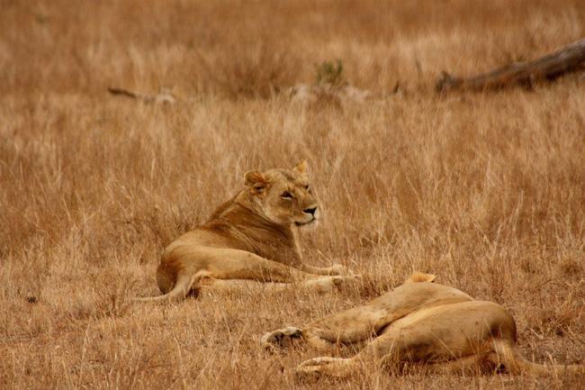 Gia đình sư tử: Câu chuyện dạy con đúng đắn đến ám ảnh của người Do Thái, bất kỳ bậc cha mẹ nào cũng nên ghi nhớ-1