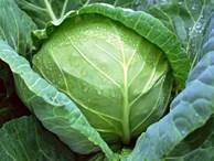 Bắp cải: Cực tốt và cực độc, biết mà tránh khi ăn kẻo 'rước họa vào thân'
