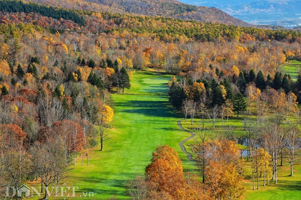 Hình ảnh mùa thu vàng tuyệt đẹp trên hòn đảo Hokkaido-2