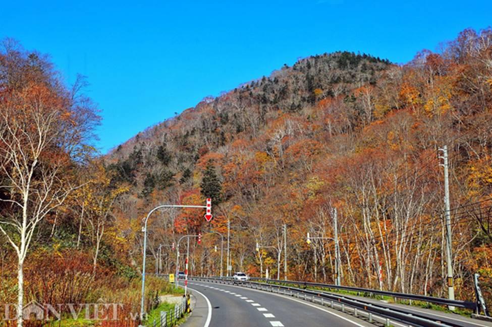 Hình ảnh mùa thu vàng tuyệt đẹp trên hòn đảo Hokkaido-5