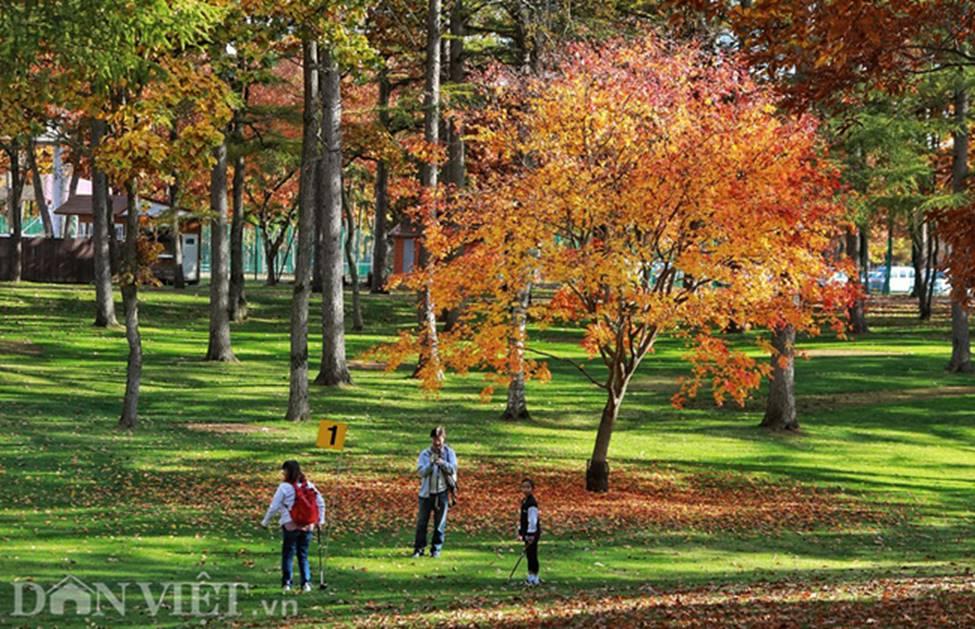 Hình ảnh mùa thu vàng tuyệt đẹp trên hòn đảo Hokkaido-6