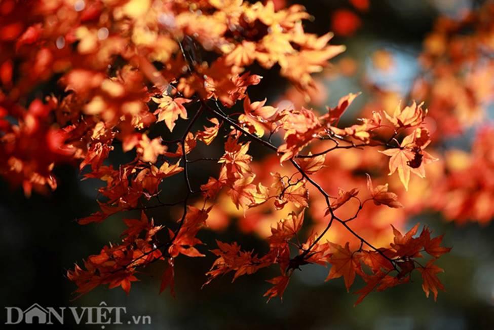 Hình ảnh mùa thu vàng tuyệt đẹp trên hòn đảo Hokkaido-7
