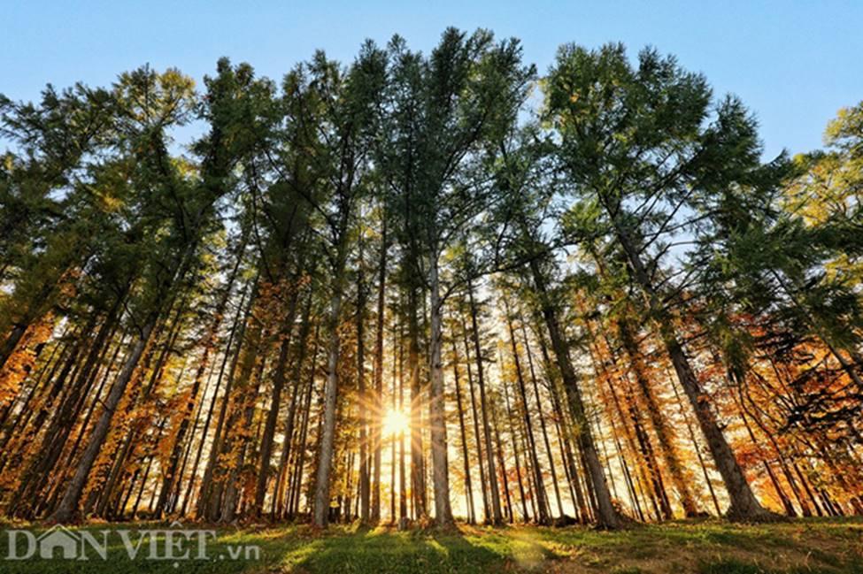 Hình ảnh mùa thu vàng tuyệt đẹp trên hòn đảo Hokkaido-11