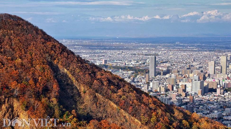 Hình ảnh mùa thu vàng tuyệt đẹp trên hòn đảo Hokkaido-12