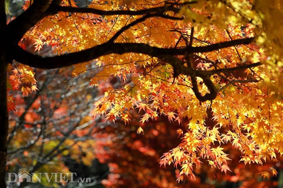 Hình ảnh mùa thu vàng tuyệt đẹp trên hòn đảo Hokkaido-13