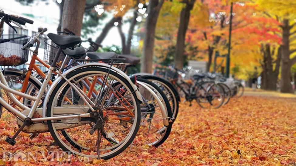 Hình ảnh mùa thu vàng tuyệt đẹp trên hòn đảo Hokkaido-14