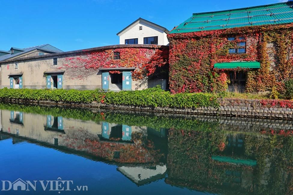 Hình ảnh mùa thu vàng tuyệt đẹp trên hòn đảo Hokkaido-15