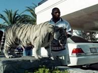 Mike Tyson nuôi hổ dữ 250kg: Choáng váng chi phí 53 tỷ đồng cho 'thú cưng'