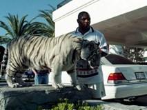 Mike Tyson nuôi hổ dữ 250kg: Choáng váng chi phí 53 tỷ đồng cho