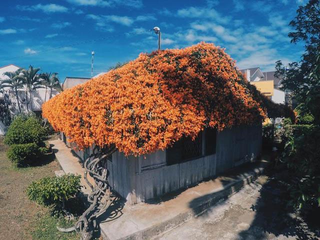 Hội chị em phát sốt đòi kéo nhau đi Lâm Đồng check in ở ngôi nhà phủ đầy hoa da cam như truyện cổ tích, từng lên cả báo Mỹ-1
