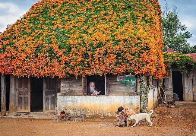 Hội chị em phát sốt đòi kéo nhau đi Lâm Đồng check in ở ngôi nhà phủ đầy hoa da cam như truyện cổ tích, từng lên cả báo Mỹ-3
