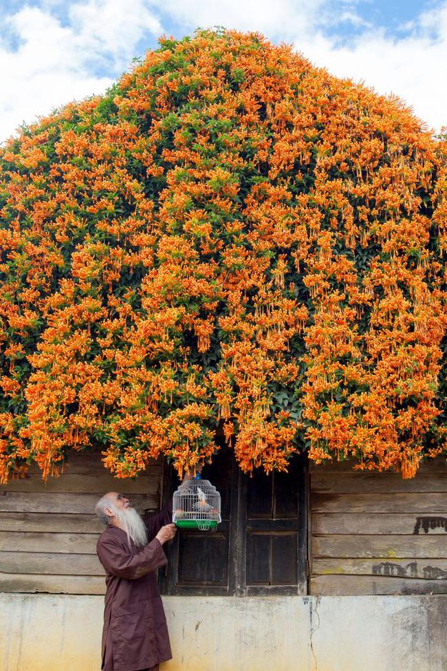 Hội chị em phát sốt đòi kéo nhau đi Lâm Đồng check in ở ngôi nhà phủ đầy hoa da cam như truyện cổ tích, từng lên cả báo Mỹ-5