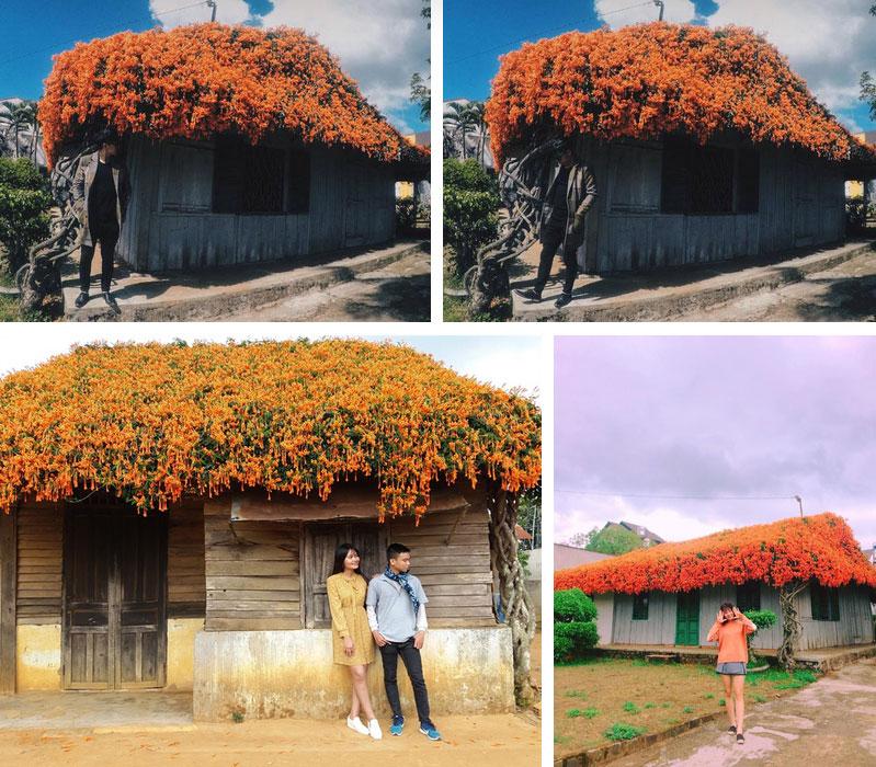 Hội chị em phát sốt đòi kéo nhau đi Lâm Đồng check in ở ngôi nhà phủ đầy hoa da cam như truyện cổ tích, từng lên cả báo Mỹ-6