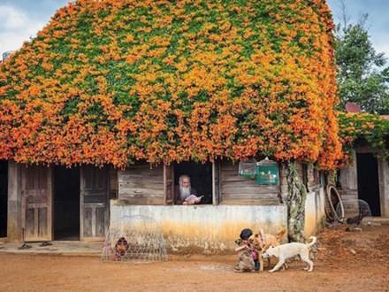 Hội chị em phát sốt đòi kéo nhau đi Lâm Đồng check in ở ngôi nhà phủ đầy hoa da cam như truyện cổ tích, từng lên cả báo Mỹ