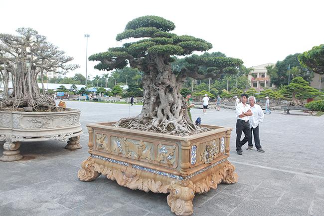 Mua cây sanh cổ quá cao, cắt làm đôi tạo thành 2 cây bán gần 20 tỷ-10