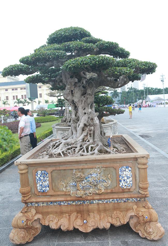 Mua cây sanh cổ quá cao, cắt làm đôi tạo thành 2 cây bán gần 20 tỷ-12