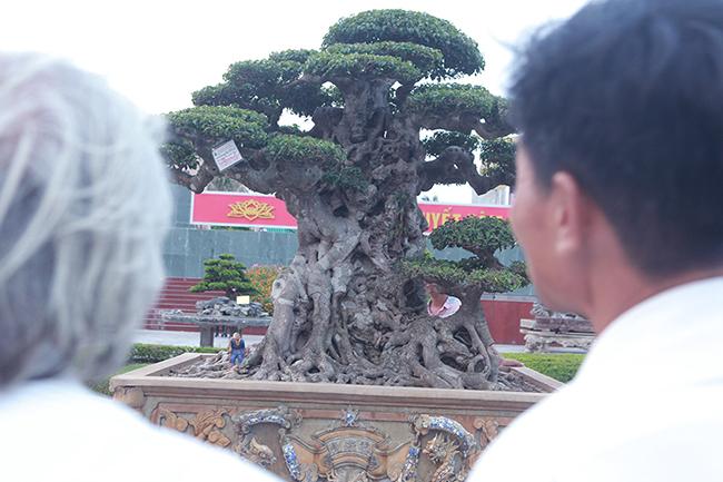 Mua cây sanh cổ quá cao, cắt làm đôi tạo thành 2 cây bán gần 20 tỷ-14