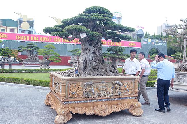 Mua cây sanh cổ quá cao, cắt làm đôi tạo thành 2 cây bán gần 20 tỷ-2