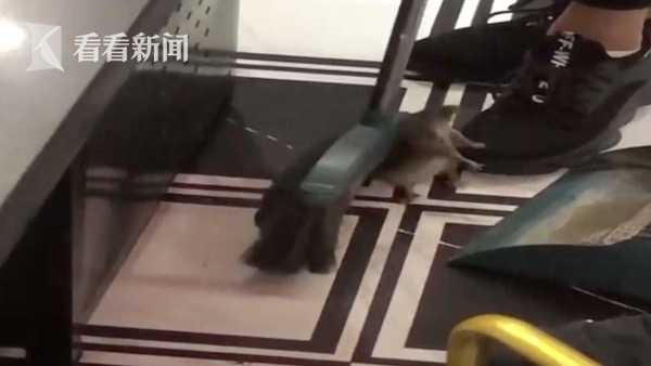 Đang ăn ở nhà hàng sang chảnh, nữ thực khách bị con chuột to rơi trúng và cắn vào da đầu, nguy cơ bị bệnh dại cấp độ 3-1