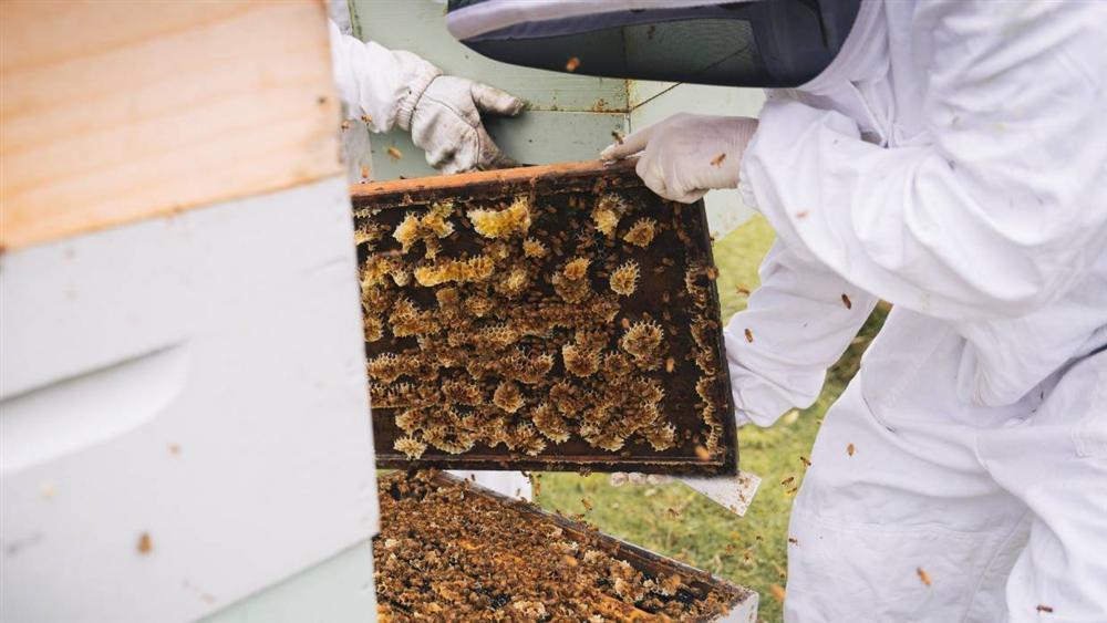 Đắt như vàng lỏng, lọ mật ong trị giá 40 triệu đồng-2