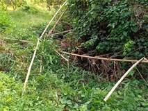 Phát hiện nửa thi thể trong bụi rậm, phần đầu cách hiện trường ban đầu khoảng 50m