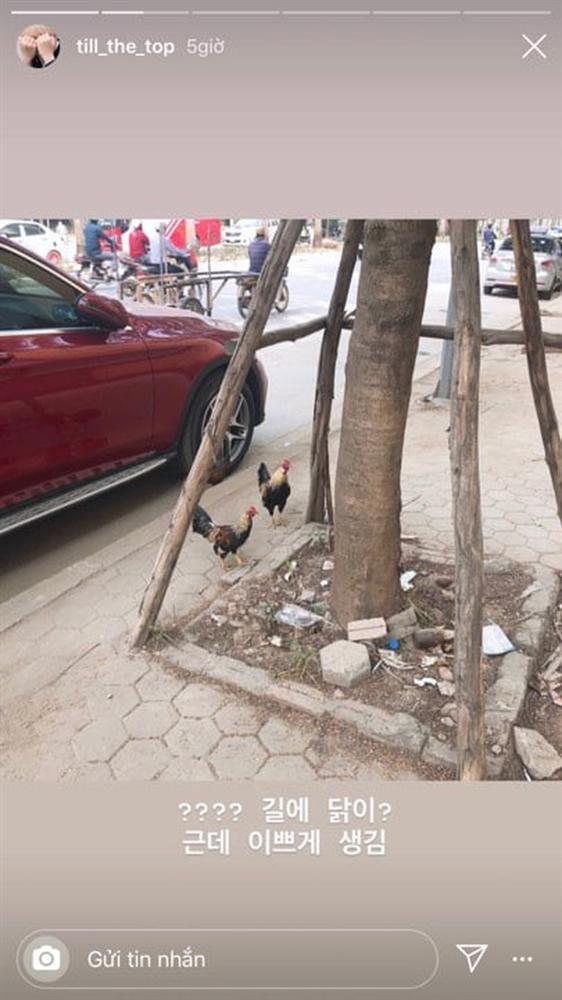 Fangirl Hàn sang Việt Nam đu AAA sốc nặng vì thấy... gà thả rông ngoài đường phố: Lạ lùng nhỉ, ngộ nghĩnh nhỉ!-2