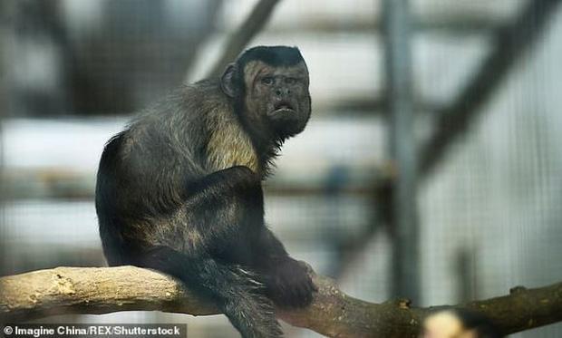 Chú khỉ có gương mặt giống hệt người đàn ông đau khổ gây sốt tại Trung Quốc-1