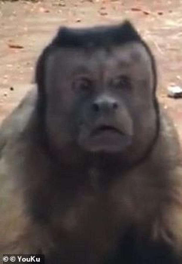 Chú khỉ có gương mặt giống hệt người đàn ông đau khổ gây sốt tại Trung Quốc-3